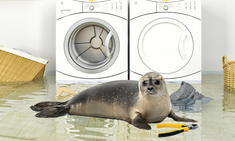 Plombier Expert | Phoque dans l'eau avec une pince devant une laveuse et sécheuse