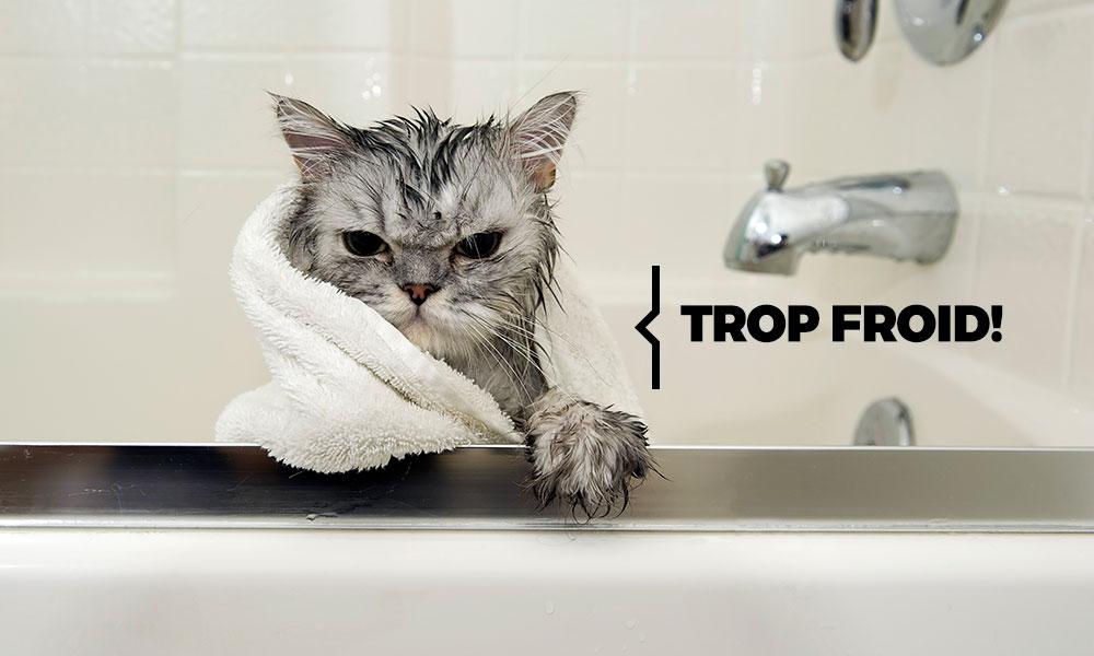 réparer le chauffe eau car chat craint l'eau froide